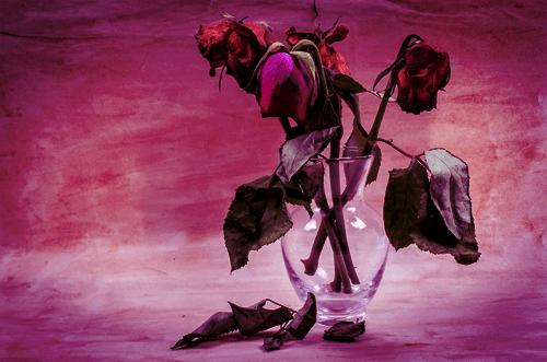 susuz_çiçek
