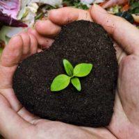 Yeşil Gübre ile Sağlıklı Bitkiler
