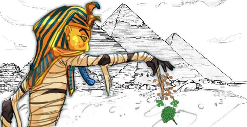 tutankhamun-mezarından-kişnişin-tohumu-çıktı